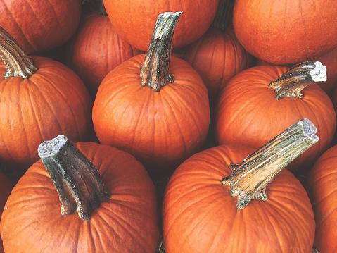 Orange Fall Pumpkins Background, Horizontal