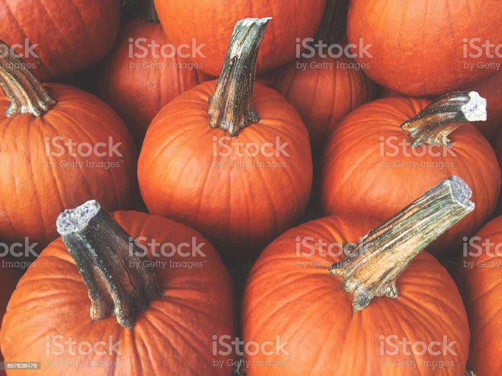Fundo de abóboras de outono - foto de acervo