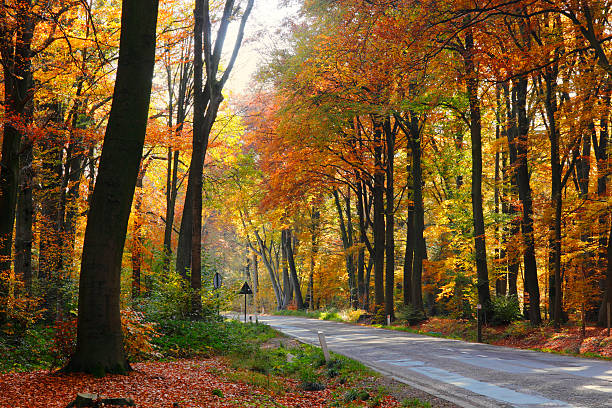 Fall road stock photo