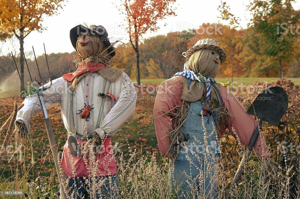 fall scarecrows stock photo