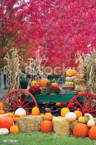 This beautiful Fall Scene shows a wagon loaded with pumpkins, mums, gourdes and corn stalks if front of Maple trees with spectacular foliage. Perfect image for any Autumn project.