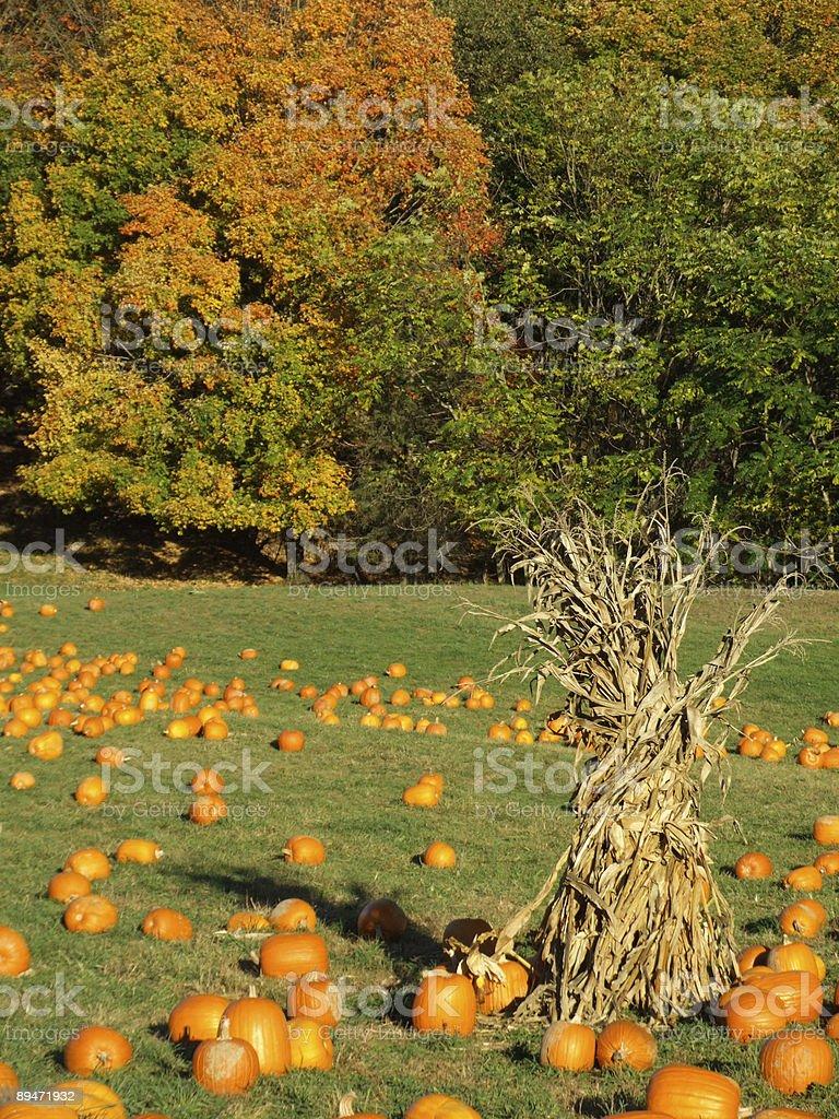 Escena de otoño foto de stock libre de derechos