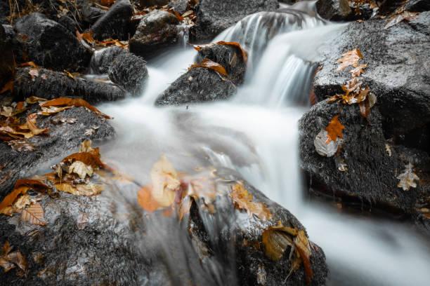 paysage de forêt avec une rivière qui coule en longue exposition en couleur sélective de l'automne - Photo
