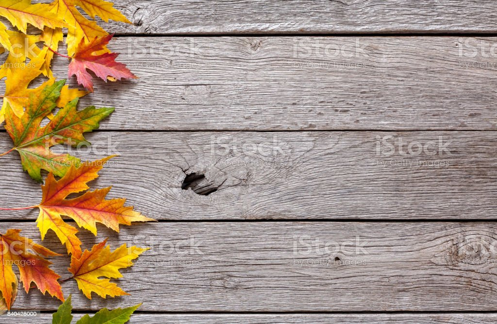 Fall season background, yellow maple leaves stock photo