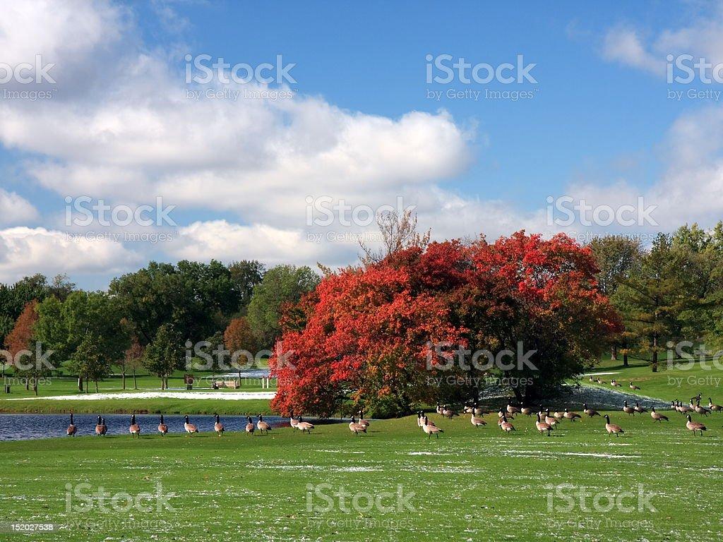 Fall season in Minnesota royalty-free stock photo