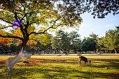 奈良公園の美しい紅葉