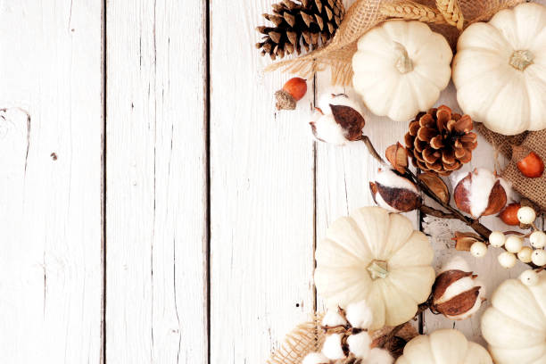 Fall side border of white pumpkins and brown autumn decor on a white wood background stock photo