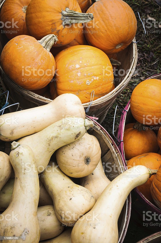 Fall Squash royalty-free stock photo