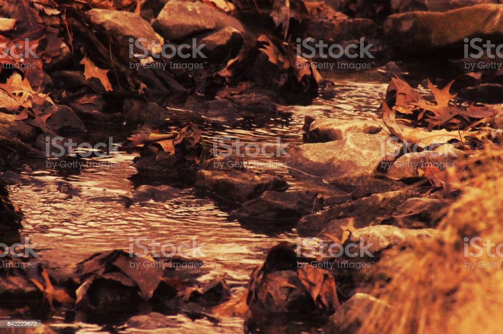 Fall Stream stock photo