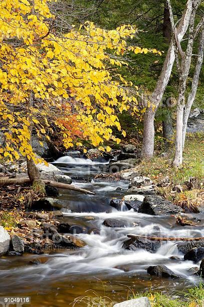 Photo of Fall Stream