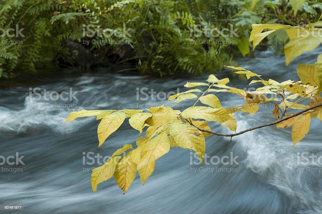 Fall Stream royalty-free stock photo