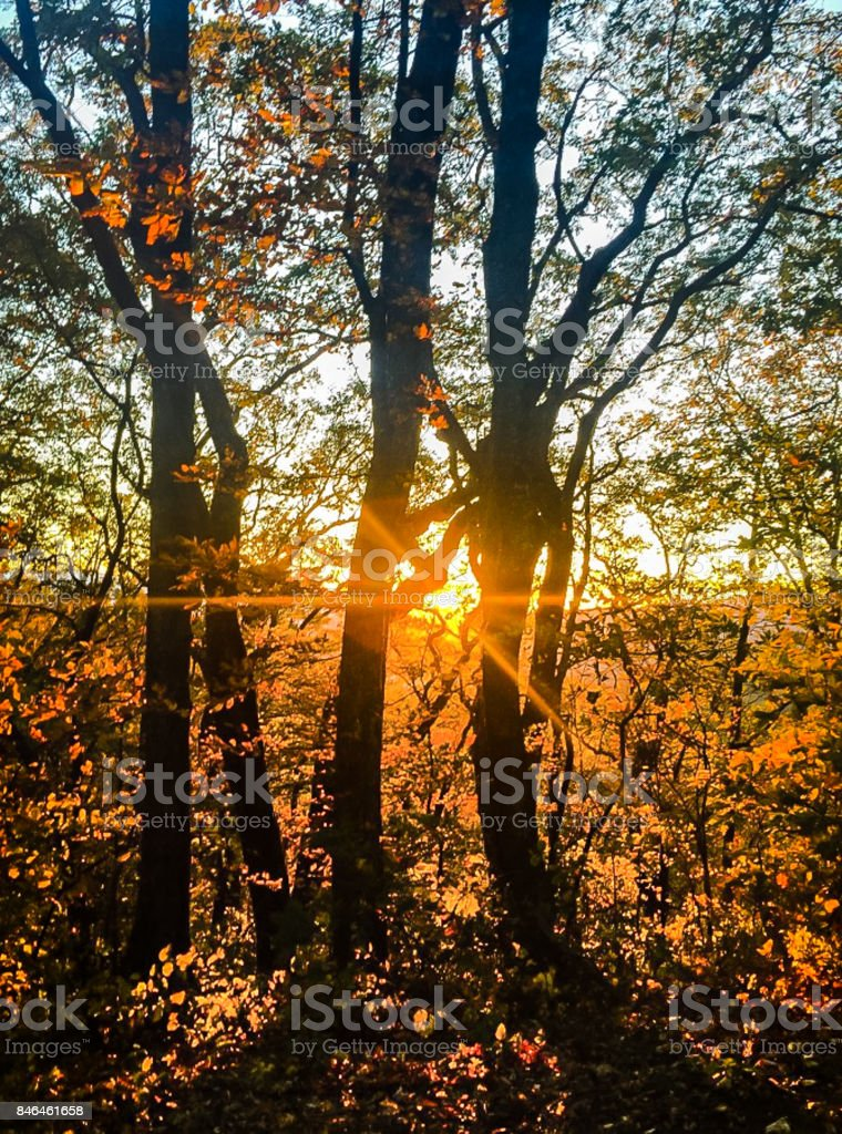 Fall Sunset over the Mountains Peeking Peeking Behind the Trees stock photo