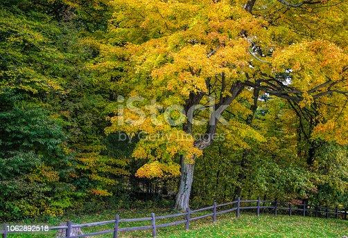 istock Fall tees in town 1062892518