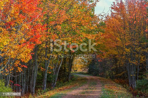 The Confederation Trail or the Trans Canada trail weaves it's way through autumn forests on rural Prince Edward Island, Canada.