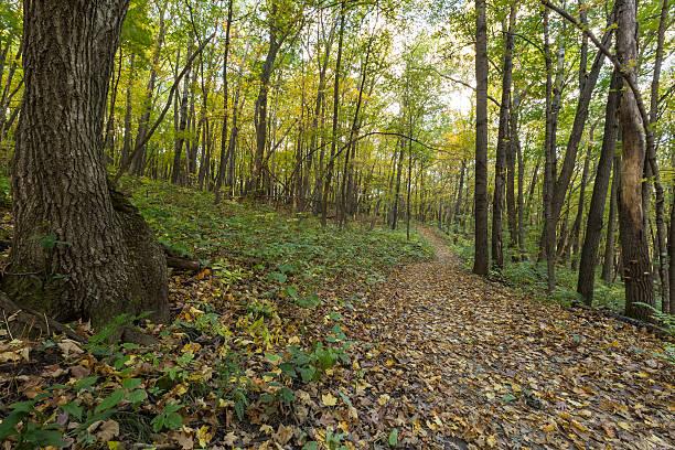 Fall Trail Scenic stock photo