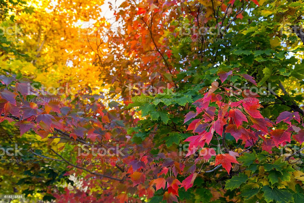 fall tree background stock photo more pictures of autumn istock