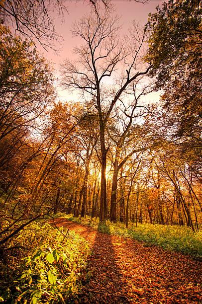 Fall Tree, Nebraska stock photo