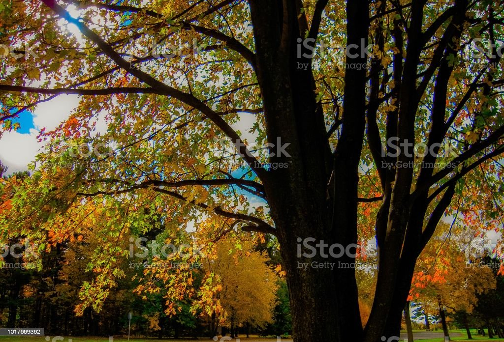 Fall tree stock photo