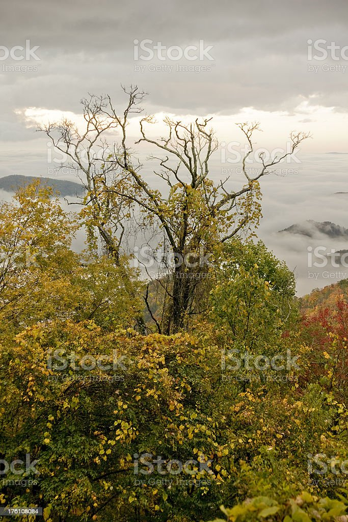 Fall Tree royalty-free stock photo