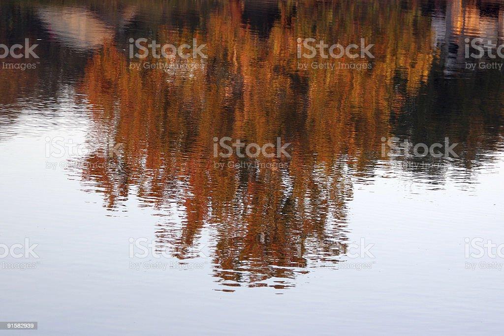 Fall Tree Reflection stock photo