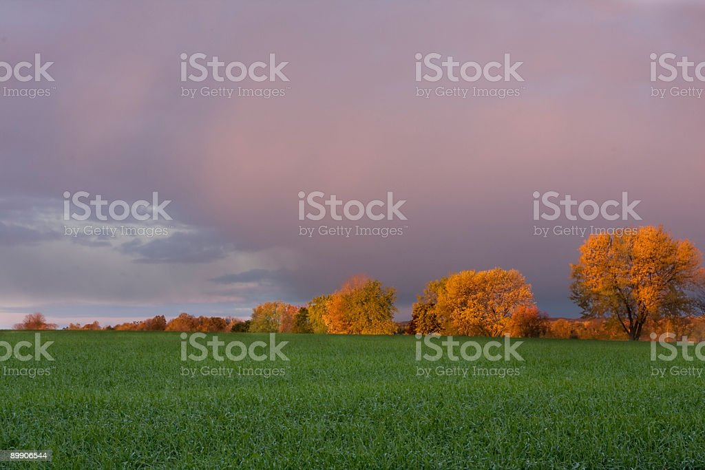 Fall treeline with grass field royalty-free stock photo