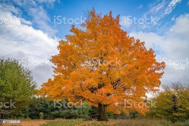 Photo of Fall Trees