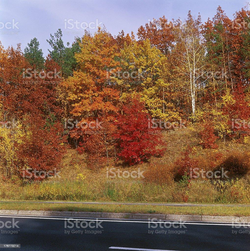 Fall trees - right. royalty-free stock photo