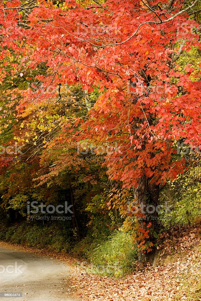 Fall Trees with Curvy Road royalty-free stock photo