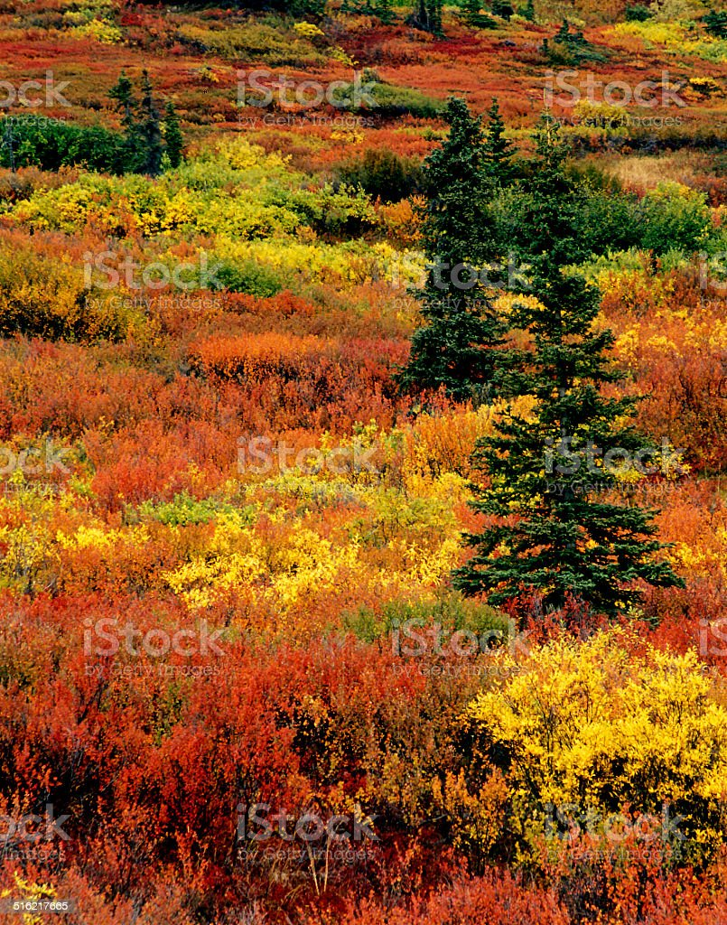 Fall Tundra stock photo