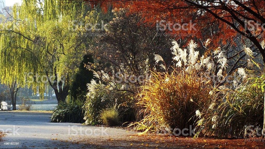 Fall Walkway stock photo