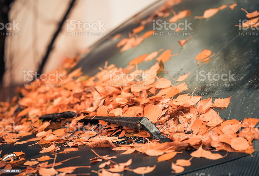 fall windshield covered with fallen leafs stock photo