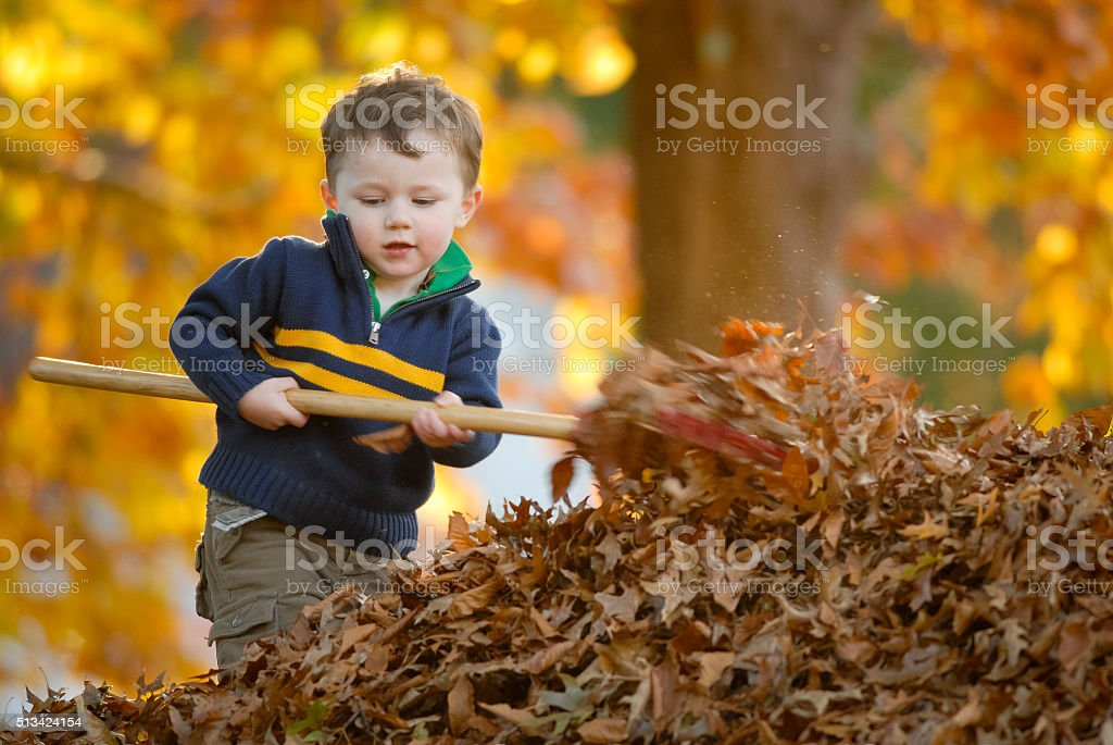 Fall Working stock photo