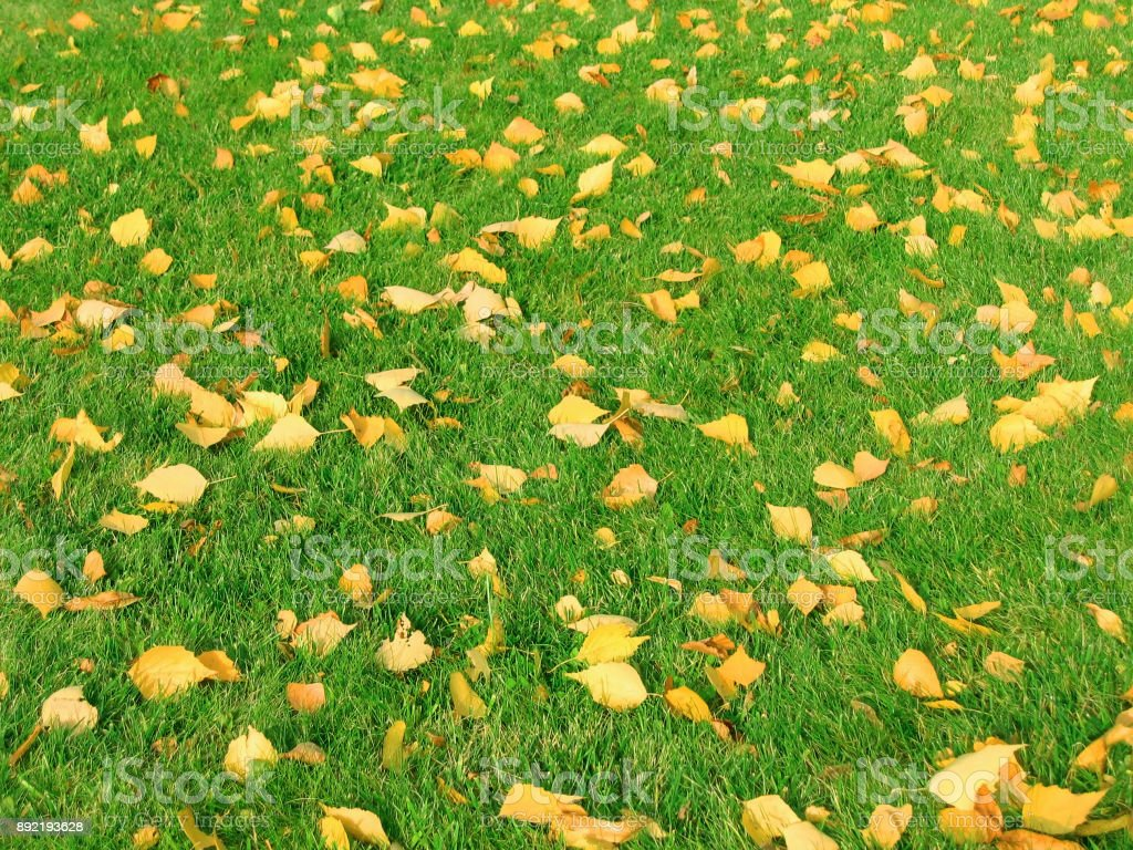 Fallen autumn leaves on green grass. stock photo