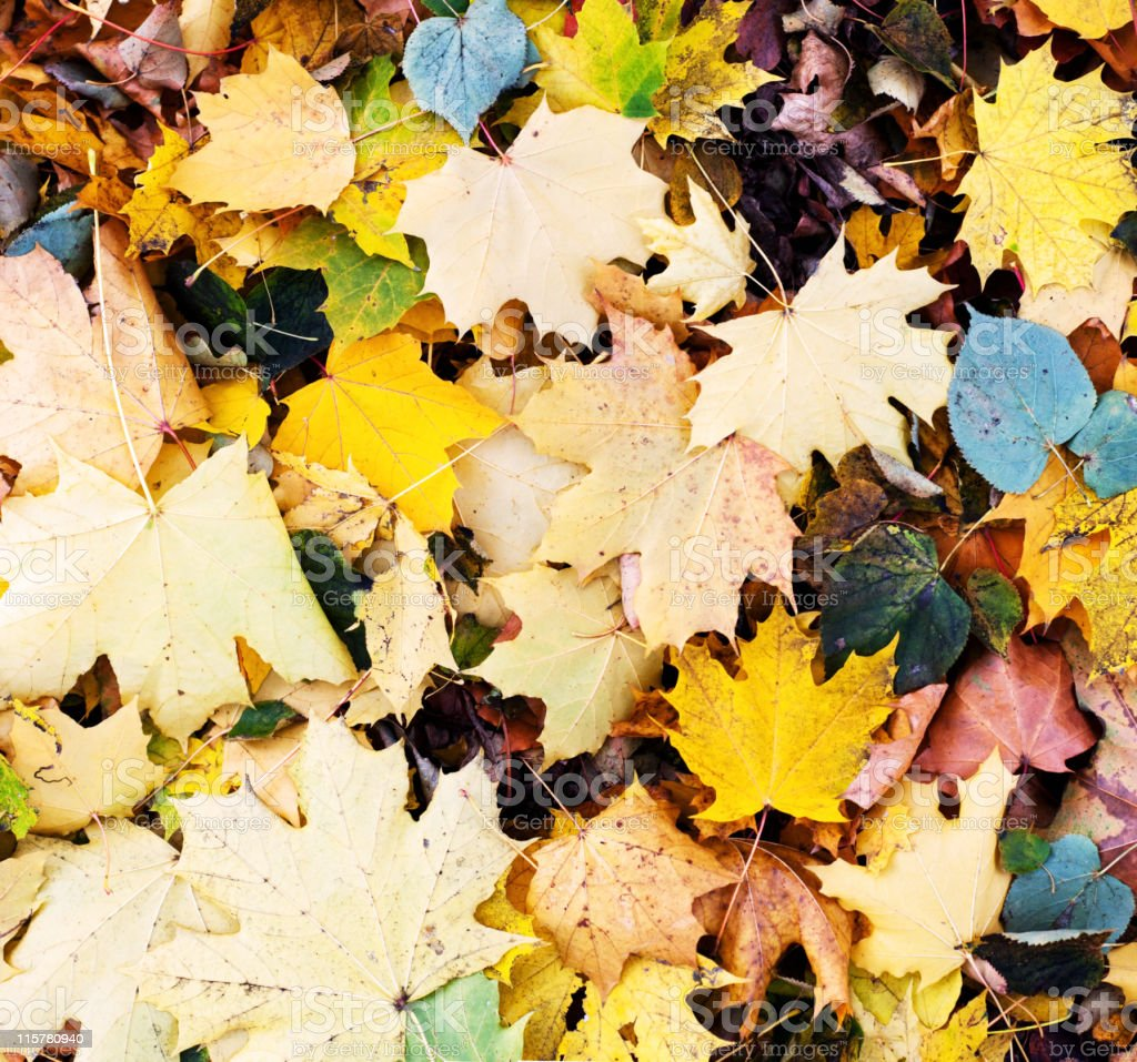 Fallen autumn leaves royalty-free stock photo