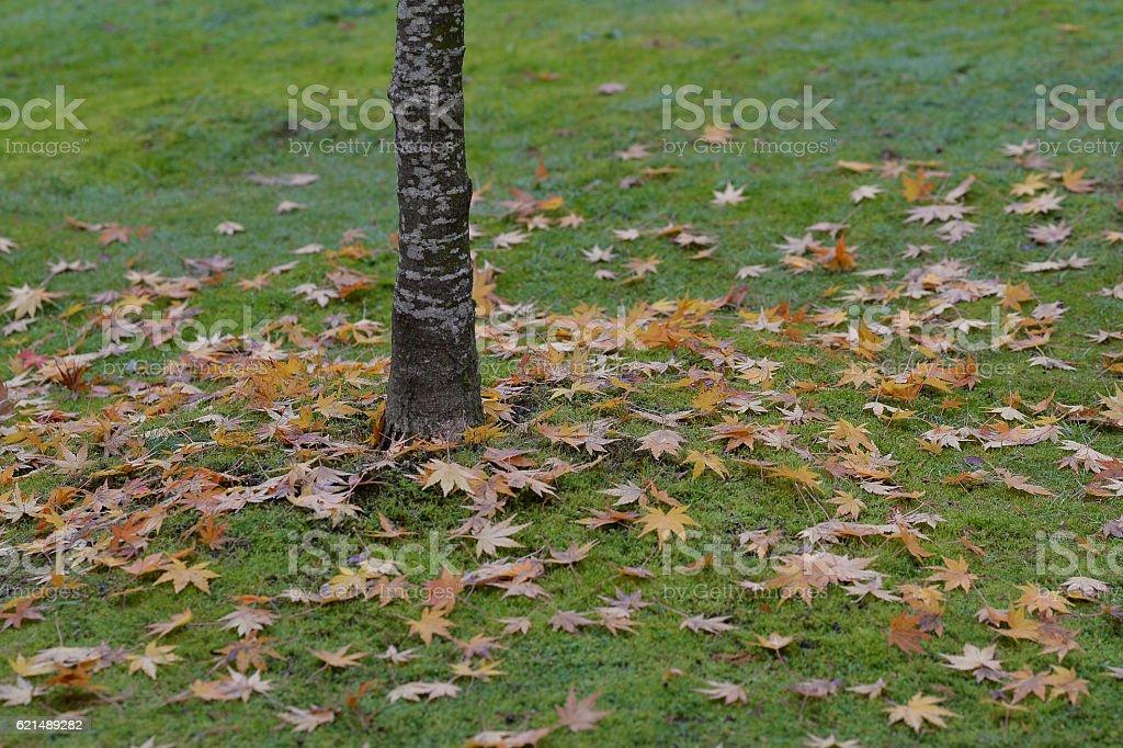 Feuilles d'automne tombé photo libre de droits