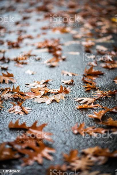 Photo of Fallen autumn tree leaves on the ground