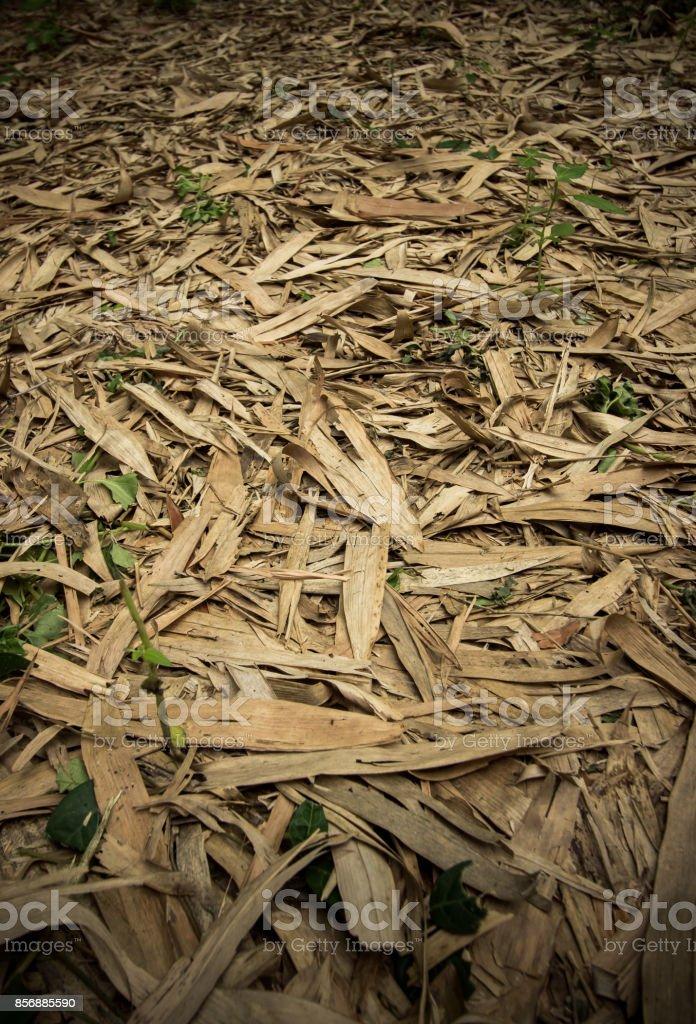 Fallen bamboo leaves at Waeruwan Garden,Phutthamonthon,Nakhon Pathom,Thailand stock photo