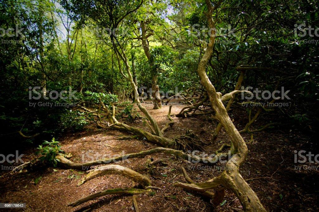 Fallen Branch stock photo