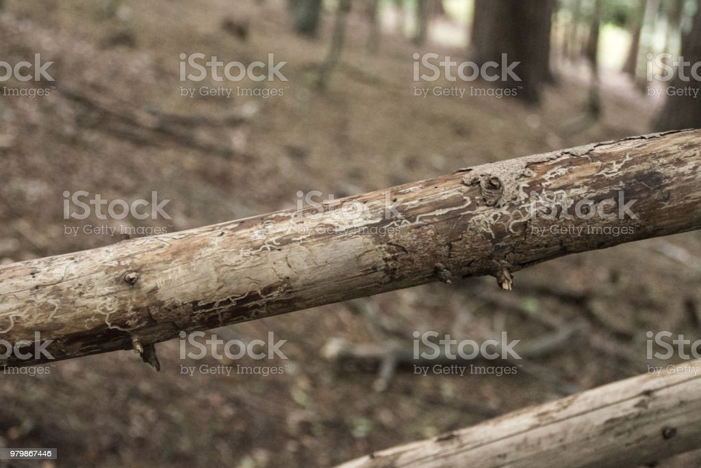Fallen branch stripped of bark stock photo