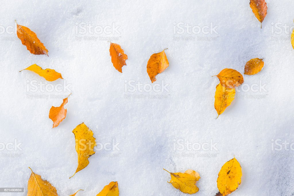 Fallen colorful autumn leaves on the snow. Winter background. photo libre de droits