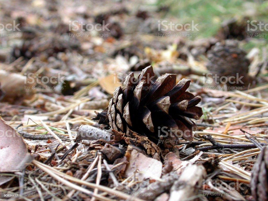 Fallen Cone royalty-free stock photo
