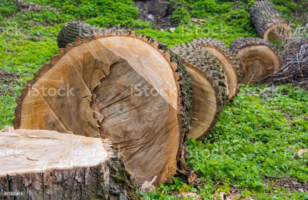 Fallen cutted tree for development stock photo