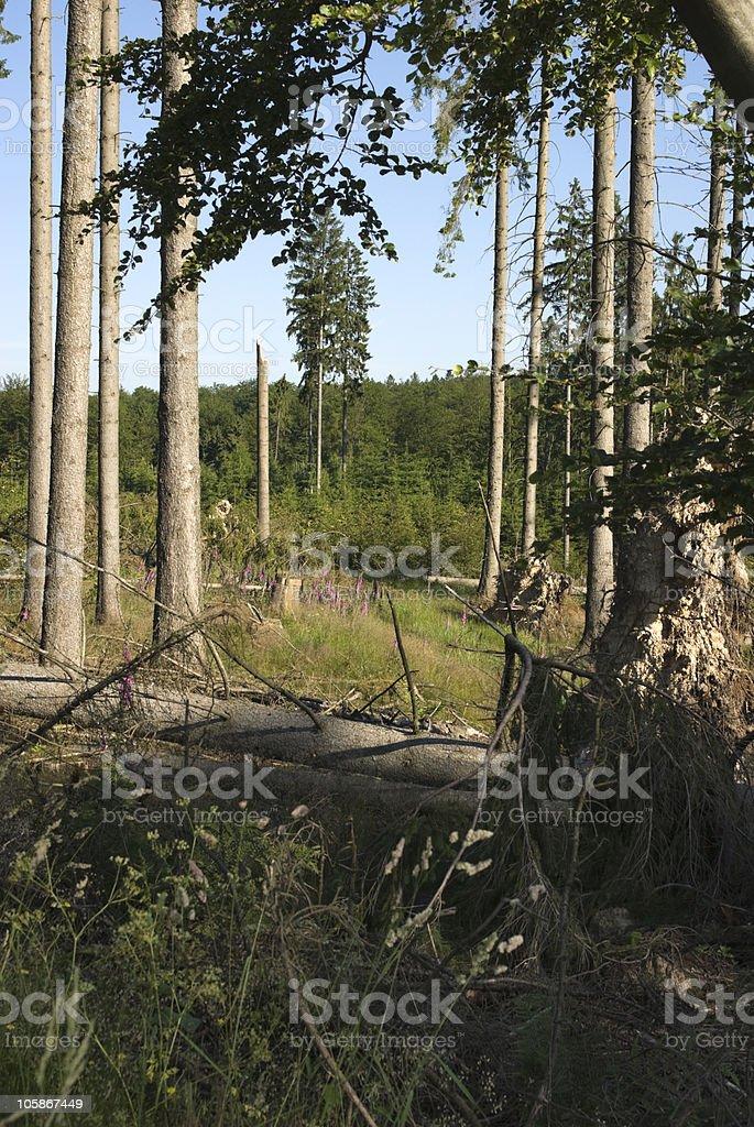 Fallen down trees stock photo