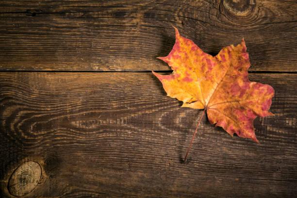 gefallenes trockenes Blatt auf Holzplanke Hintergrund – Foto
