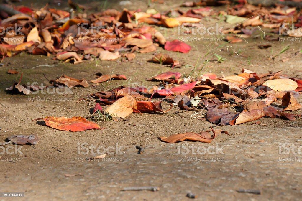 Fallen fallen on the road Lizenzfreies stock-foto