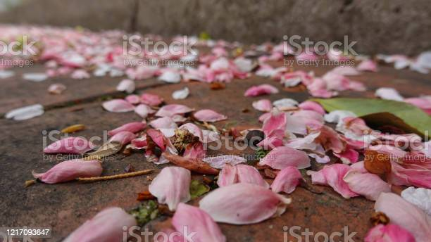 Fallen flower leaves on brick fallen pink leaves picture id1217093647?b=1&k=6&m=1217093647&s=612x612&h=tdrd8gkymsvu7hh8hr7r8ue650kprbaa8vl60voamtc=