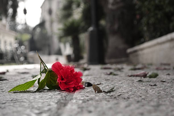 fallen flower stock photo