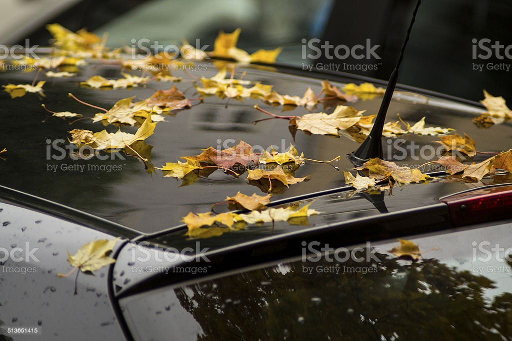 Fallen from the tree autumn leaves on car roof stock photo