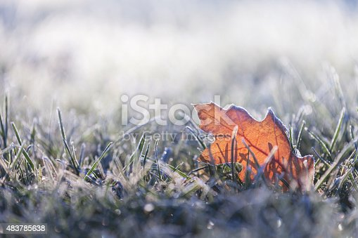 A fallen leaf in the grass at sunrise, covered in early morning frost in the first days of winter.