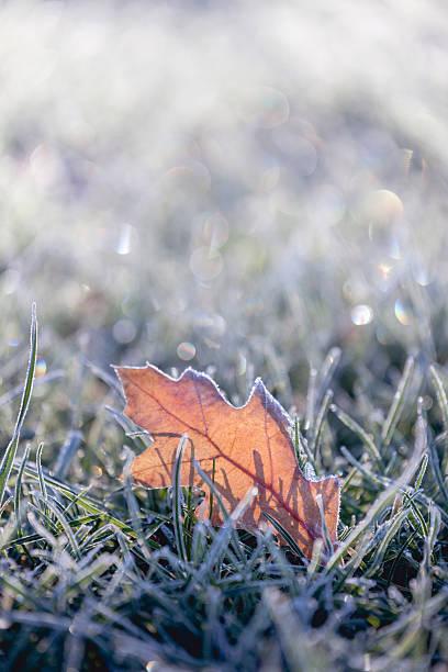 Fallen Blätter im winter frost bedeckt – Foto
